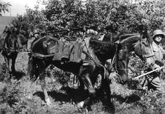 German cavalry on the Eastern Front, 1942