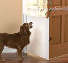 The Dog Escape Preventer! OMG I NEED THIS!
