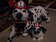 Sparkles the Fire Safety Dog - Sparkles' Photos