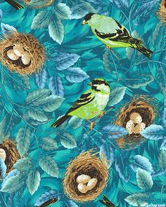 Flutter - Gold Finch - Teal