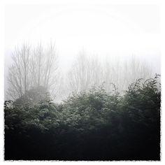Fog ice white sky