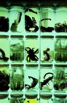 Wet Specimens of Scorpions, Tarantulas and Centipedes.  http://steampunkincornwall.blogspot.co.uk/