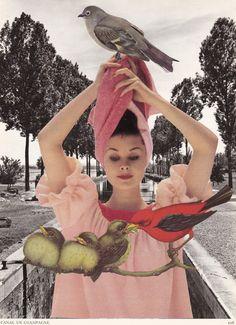 Birds.jpg (731×1008)