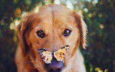鼻に蝶々がとまった犬