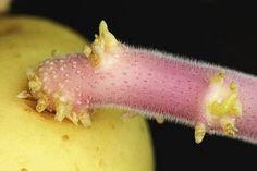 Dimentica acqua e limone: questa è la nuova scoperta per perdere peso e disintossicarsi