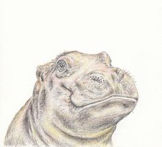Baby animal print for nursery  Hippo digital download
