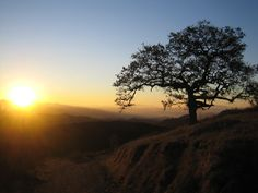 Great place to hike daily...The Daley Ranch, just down the street from my home. New Year's Day Sunrise 2008 Daley Ranch, Escondido, CA
