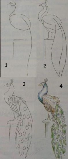 Kids art. Drawing lessons for beginners - A PEACOCK / How to draw. Painting for kids / Luntiks. Crafts and art activities, games for kids. Children drawing and coloring pages by huaxuz