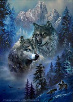Wolf Photos, Wolf Pictures, Wolf Images, Wildlife Art, Two Wolves, Wolves