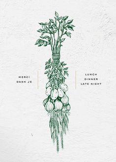 Illustration for Brasserie Saison Restaurant, one color pencil drawing, duotone, green, dried foods, onions, potatoes, franco-belgian casual dining / Branding