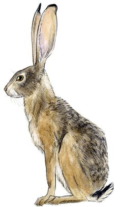 Cool Gadgets Ideas - - High Tech Gadgets Cars - Camping Gadgets For Women - Gadgets Compleanno Bambini - Rabbit Drawing, Rabbit Art, Animal Paintings, Animal Drawings, Art Drawings, Watercolor Animals, Watercolor Art, Hare Illustration, Hare