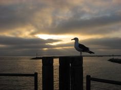 Free photo: Seagull, Sunset, Pier, Boardwalk - Free Image on Pixabay - 1803861
