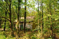 Welnesschalet voor 4 pers  in de bossen