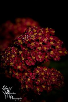 """""""Ruby Red"""" by sharedperspectivesphotography, via Flickr"""