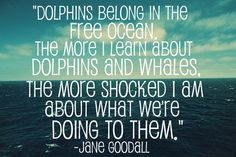 Exclusive Interview with Dr. Ventre, Former SeaWorld Trainer   Cetacean Inspiration