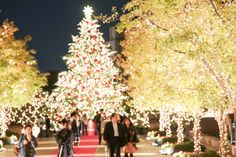 images of christmas scenes in japan Background Wallpaper Image