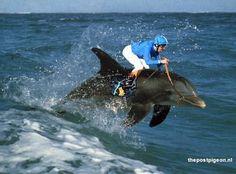 Dolfin jockey