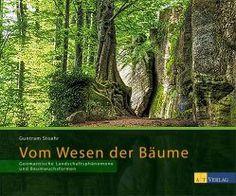 Geomantie - Kraftorte und ihr Einfluss auf Bäume