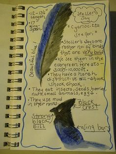 Nature Journals-Ideas and Tips