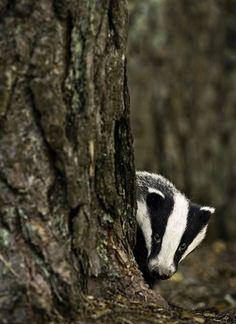 une-maison-abandonnee-dans-les-bois-envahie-par-des-dizaines-d-animaux-en-tous-genres27