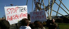 Demonstration gegen Delfine im Connyland    01.04.2012 12:57 - von: jza    Obwohl das Parlament zurzeit über ein Delfinverbot diskutiert, haben knapp 100 Personen ihrem Ärger Luft gemacht. Sie haben vor dem Connyland gegen die Delfinhaltung demonstriert.