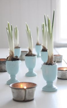 use painted egg cups to display bulbs