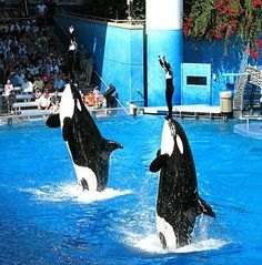 Florida - Orlando - Sea World, obviously. Too bad they can't do this cool trick anymore!