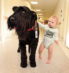 Ralf the Schnauzer helps ailing toddlers to walk again