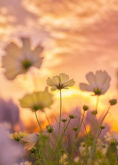 Flowers... are a proud assertion that a ray of beauty outvalues all the utilities of the world. ~ Ralph Waldo Emerson
