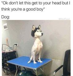 Because every dog has had a bad haircut: