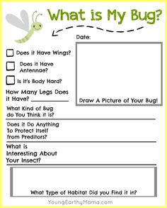FREE insect identification printable for kids. Nature science, science, early learning. Have fun and happy hunting!
