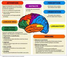 Schéma simplifié des grandes fonctions du cerveau