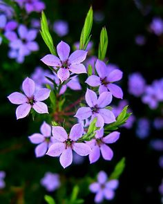 55 Best Plants I Have In My Alabama Garden Images Gardening