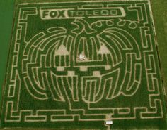 Corn Maze in Toledo Ohio!