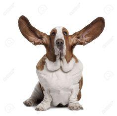 basset hound - Buscar con Google