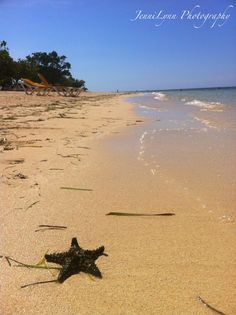 Starfish...Jamaica.  #photography, #travel, #Jamaica, #beach, #starfish
