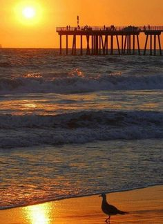 Nags Head, NC....one of my favorite places  http://www.pirates-cove.com/