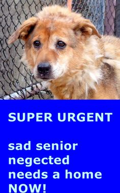 SAFE 1/21/15 (by Ready for Rescue) --- SUPER URGENT 1/18/15 Manhattan Center   ANTHOULA - A1025795  FEMALE, TAN / BLACK, COLLIE SMOOTH MIX, 10 yrs STRAY - STRAY WAIT, NO HOLD Reason STRAY  Intake condition GERIATRIC Intake Date 01/18/2015 https://www.facebook.com/photo.php?fbid=947273418618871