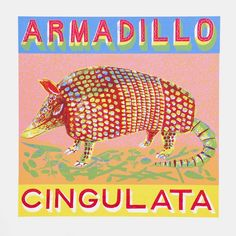A is for Armadillo who is short stout and round. #Illustration by Alice Pattullo.