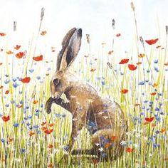 SP1 08 17  Meadow Hare