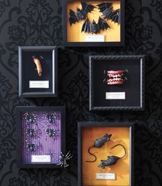 DIY Creepy Specimen Boxes ~ decorating craft project: shadowboxes in black are lined with Halloween craft paper & transformed into displays of chilling curiosities. You can find most at the dollar store; just arrange & secure with t-pins to create spooky specimens. | via Woman's Day magazine online