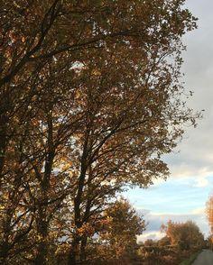 Winter trees. #treestagram #winterdays #winterday #bluesky #instatree #treestagram #treeoftheday #treestalking #tree #trees #treeporn #tree_captures #tree_magic #treelovers #leaves #branch #branches
