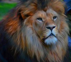 ps-pictureshop: #Animals,#Lion,#Löwen,#fauna,#Cecil,