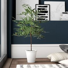 Mercury Row Artificial Green Olive Floor Ficus Tree in Pot Faux Olive Tree, Dracaena Plant, Ficus Tree, Fiddle Leaf Fig Tree, Artificial Boxwood, Artificial Plants, Boxwood Topiary, Floor Plants, Bamboo Tree