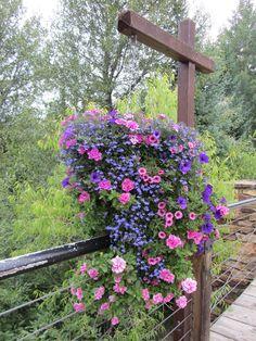 Hanging basket flowers