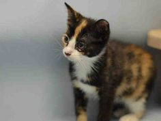 RAMI - A1083447 - - Manhattan ***TO BE DESTROYED 08/20/16***2 SWEET SISTER…