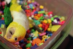Make Your Own Bird Toys