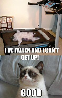 grumpy cat, treadmill, has fallen and can not get up