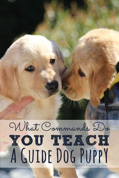 What commands do you teach a guide dog puppy?