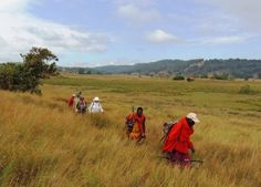 Maasai Trails http://www.maasaitrails.com/ Great Maasai-land Trek! From Maasai Mara to Loita Hills over 9 days!